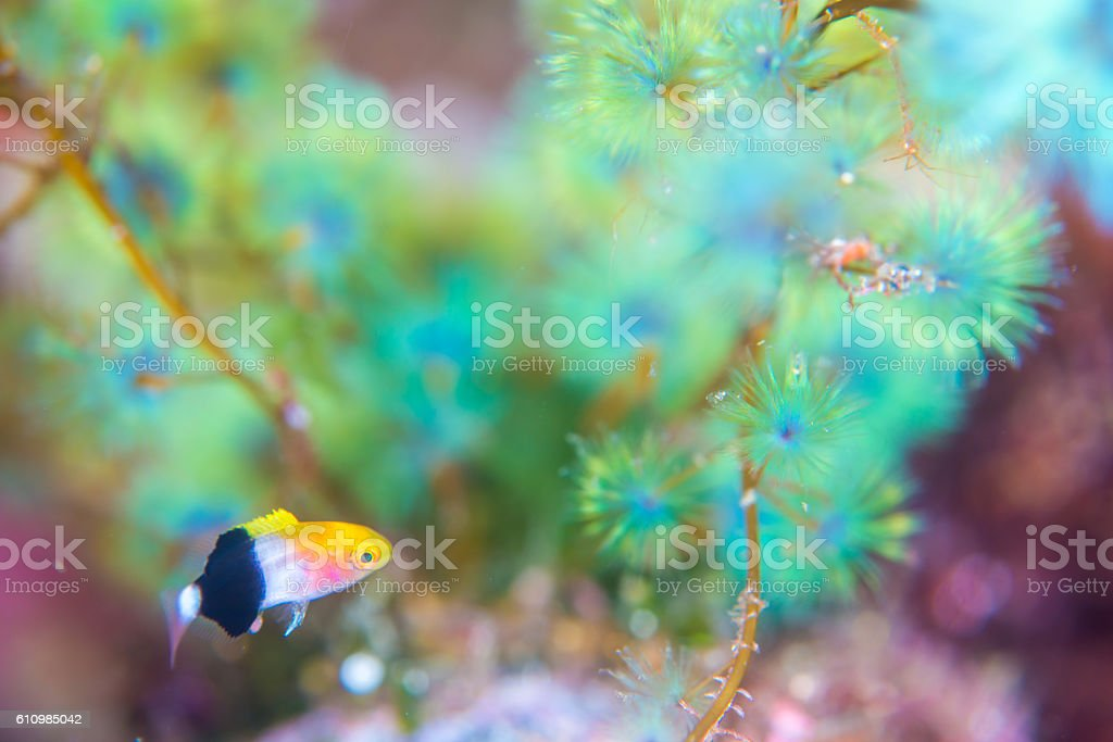 Tarry fish foto de stock royalty-free