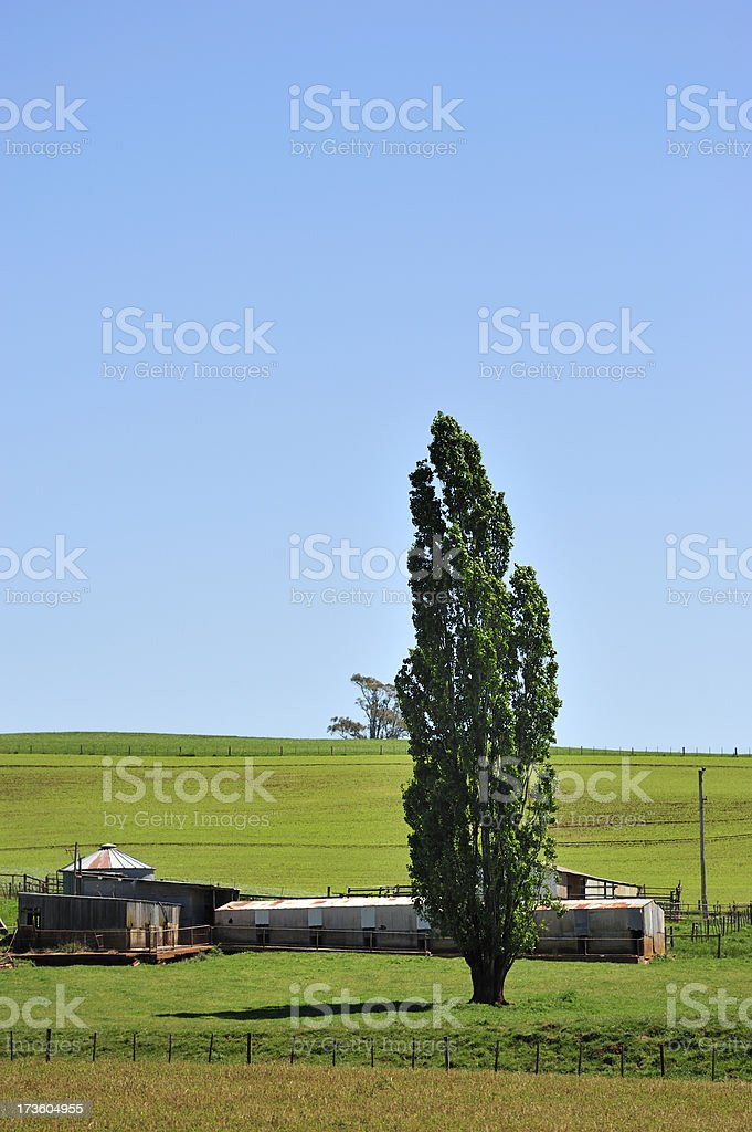 Tasmanian country side royalty-free stock photo