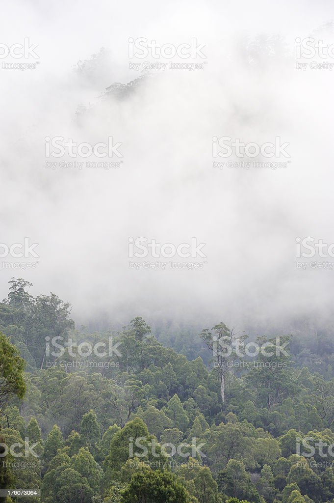 Tasmanian Forest royalty-free stock photo