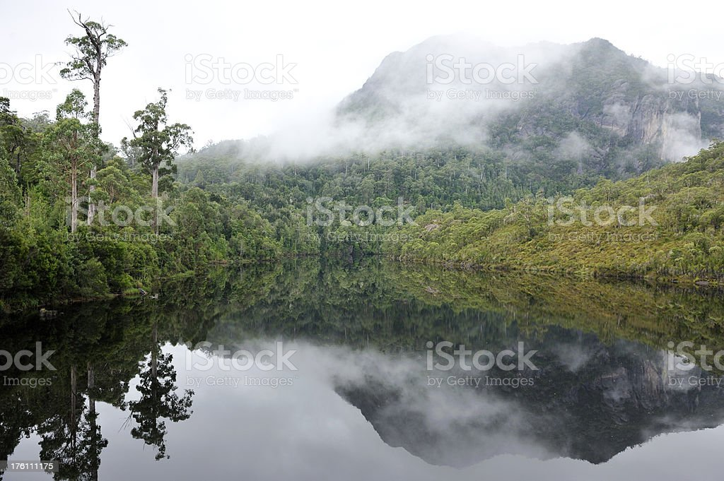 Tasmanian Forest stock photo