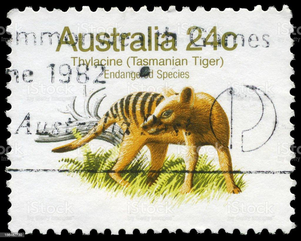 Tasmanian Tiger royalty-free stock photo