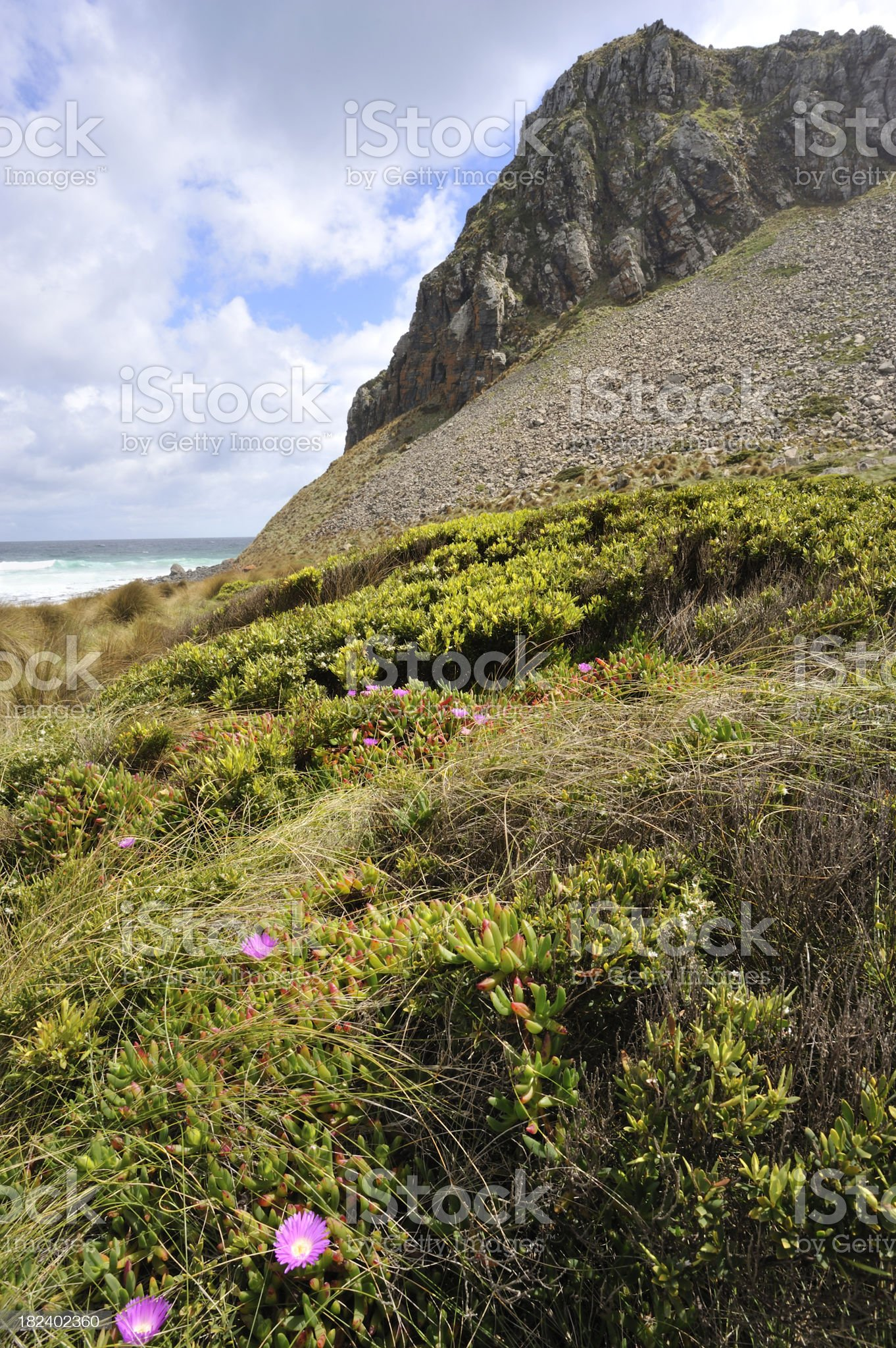 Tasmanian West Coast royalty-free stock photo