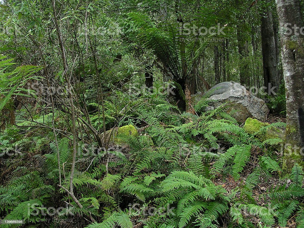 Tasmanian Wilderness royalty-free stock photo