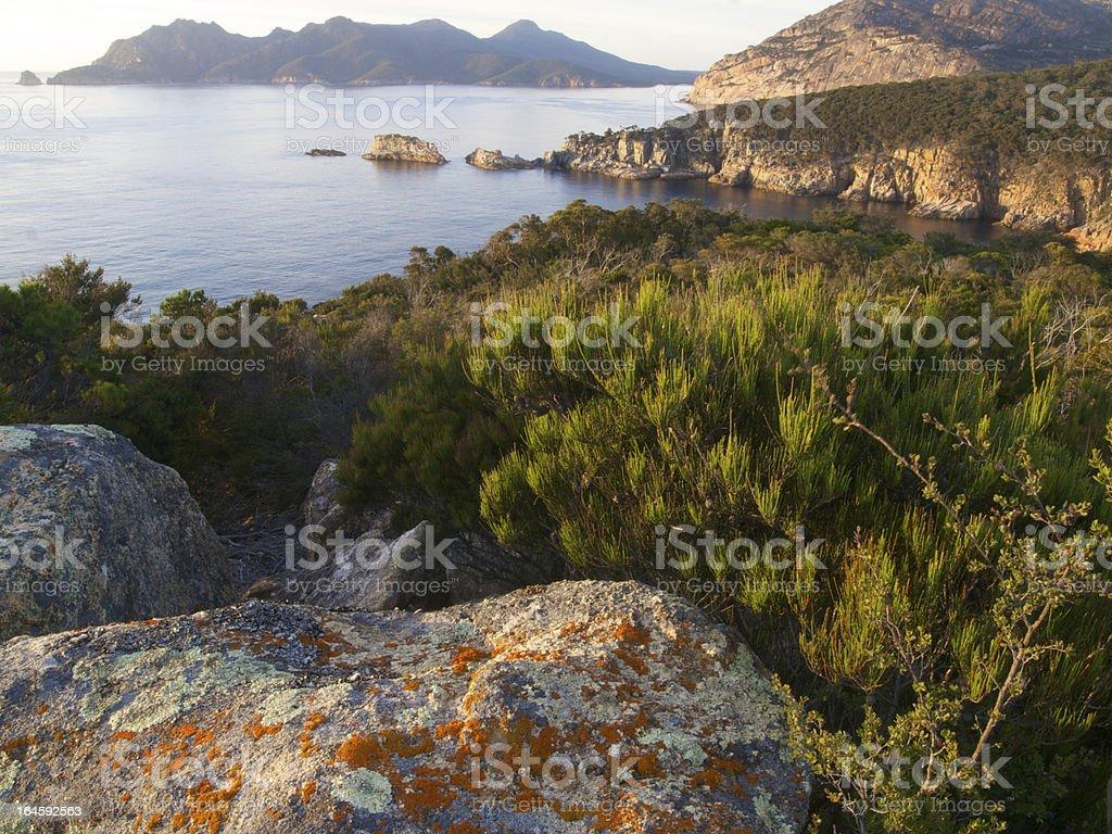 Tasmanian wilderness stock photo