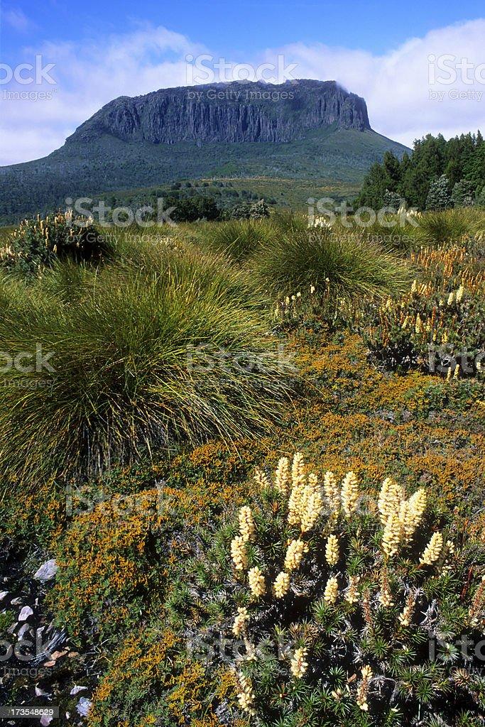 Tasmanian wildlife Landscape stock photo