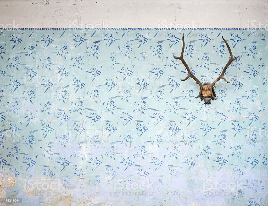 tasteless old wall  with stag trophy XXL stock photo