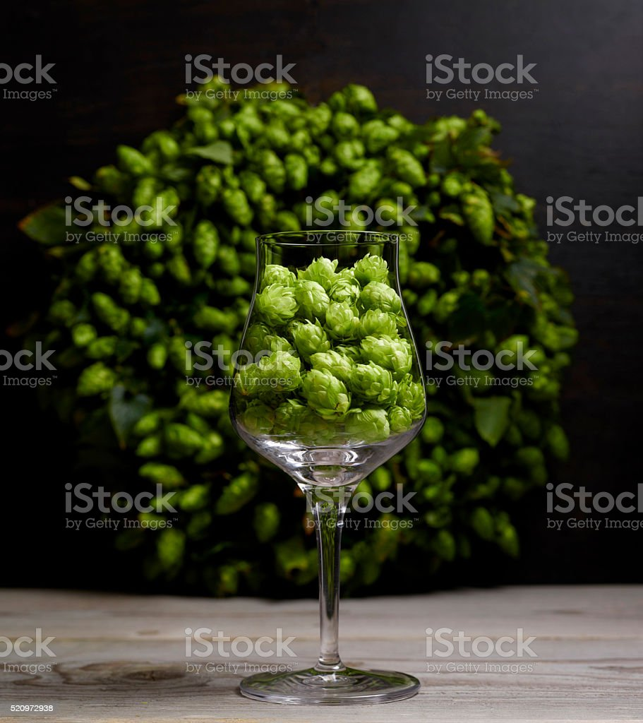Ein Probierglas zum Bier Tasting gefüllt mit frischem grünen Hopfen stock photo