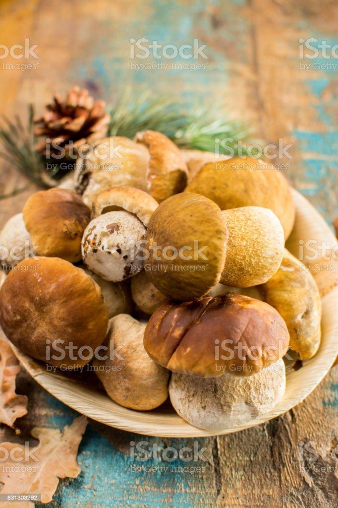 Tasty food - fresh porcini boletus oak muchrooms, high quality, ready to cook stock photo