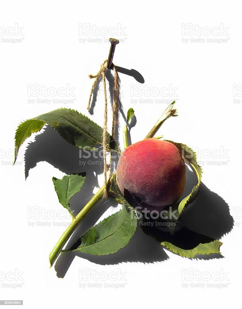 Tasty peach stock photo