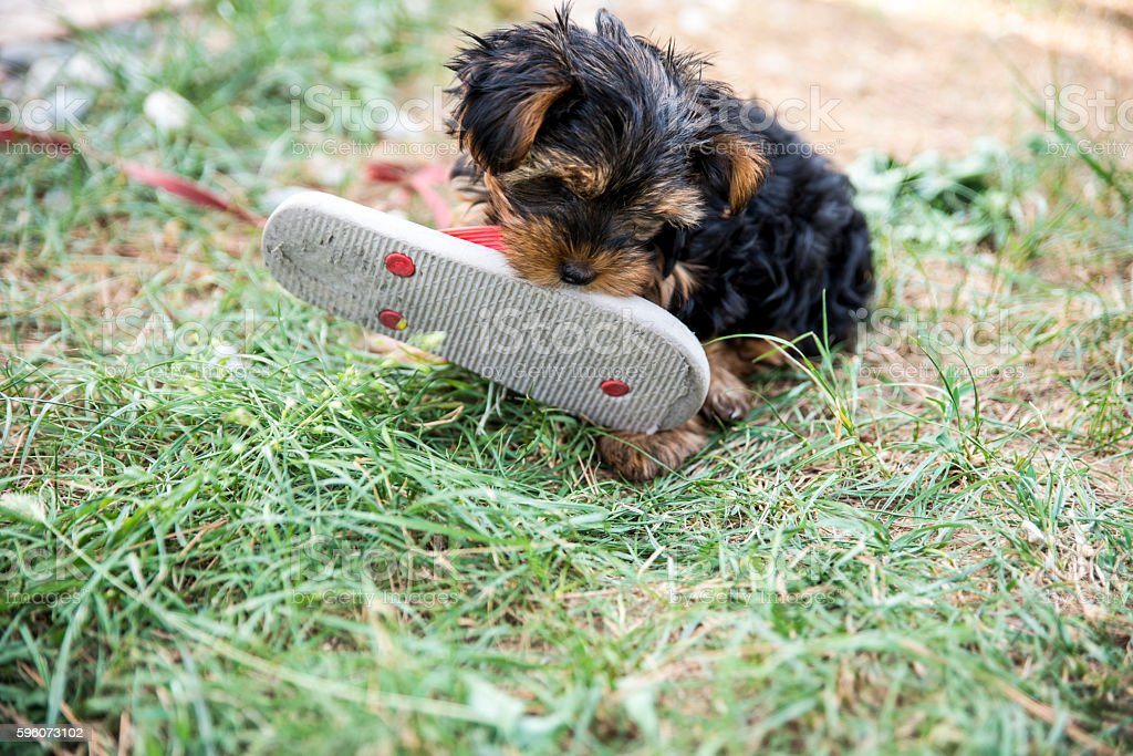 Tasty! stock photo