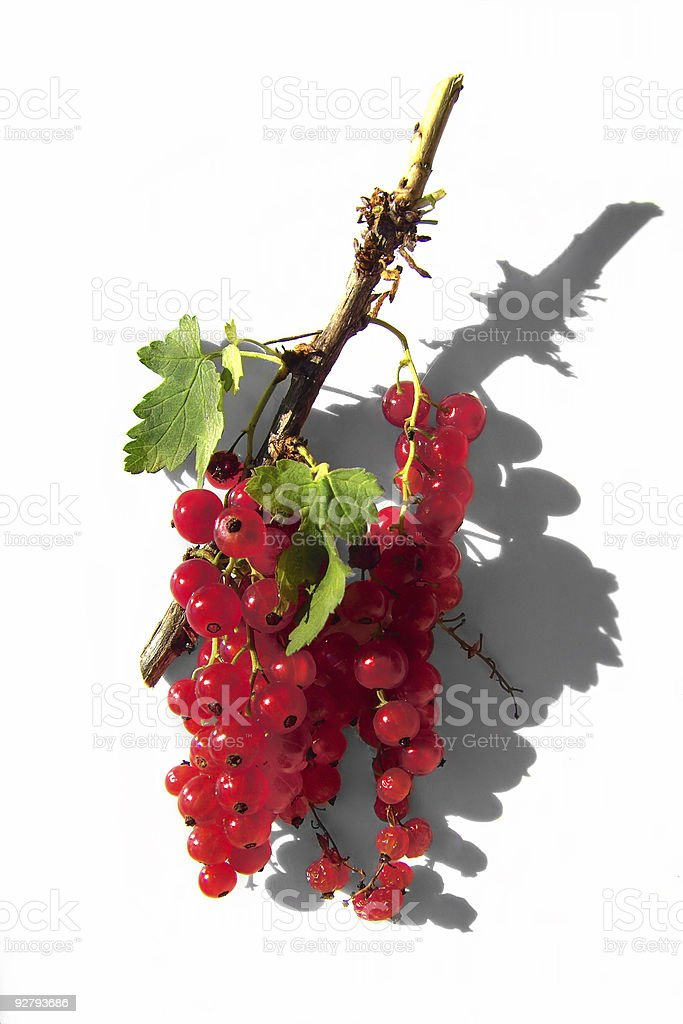 Tasty redcurrants stock photo