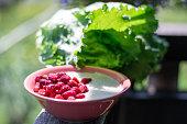 Tasty semolina with fresh strawberry