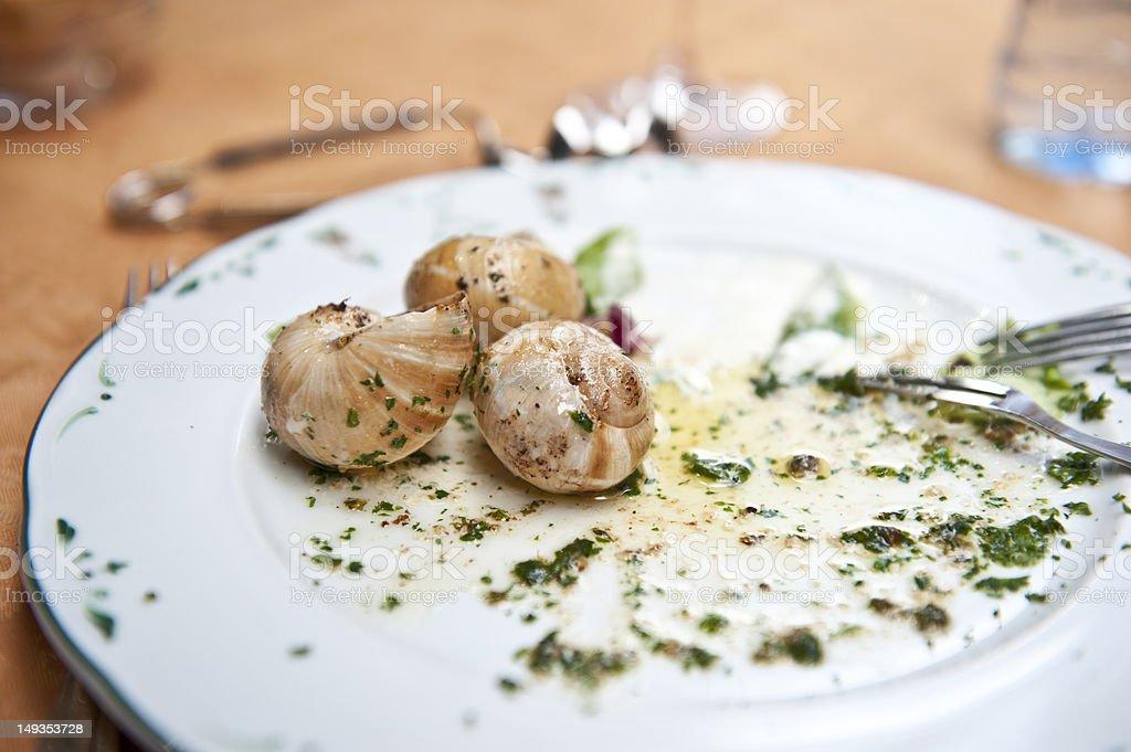 Tasty Snail stock photo