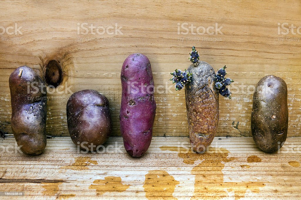 Tater Lineup royalty-free stock photo