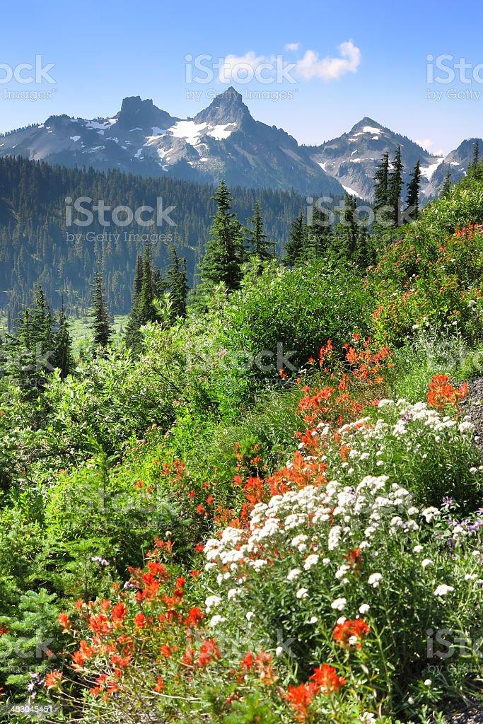 Tatoosh Mountain Range royalty-free stock photo