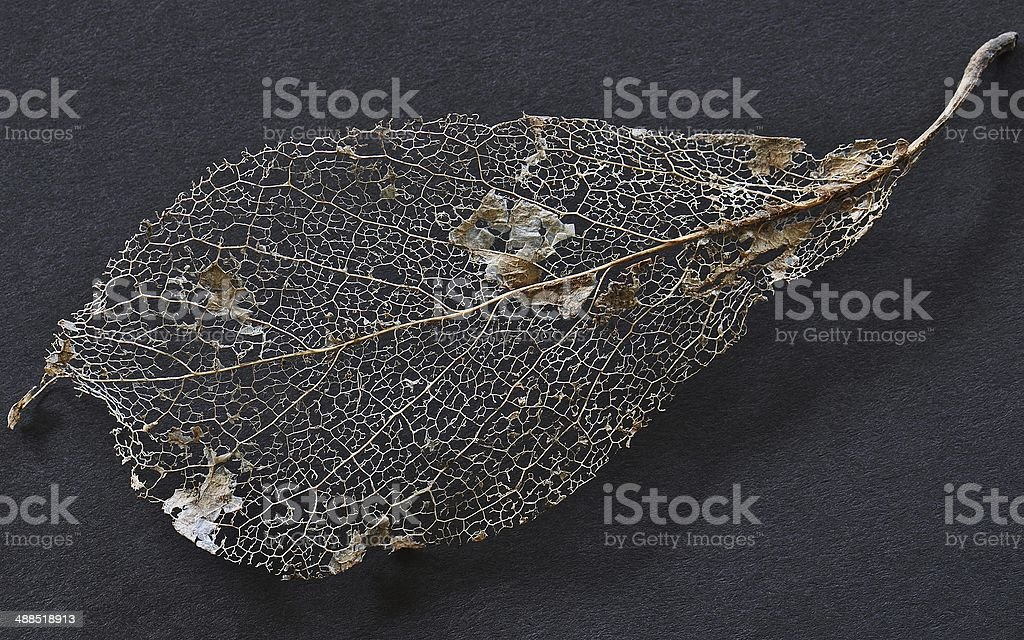 Tatted Leaf stock photo