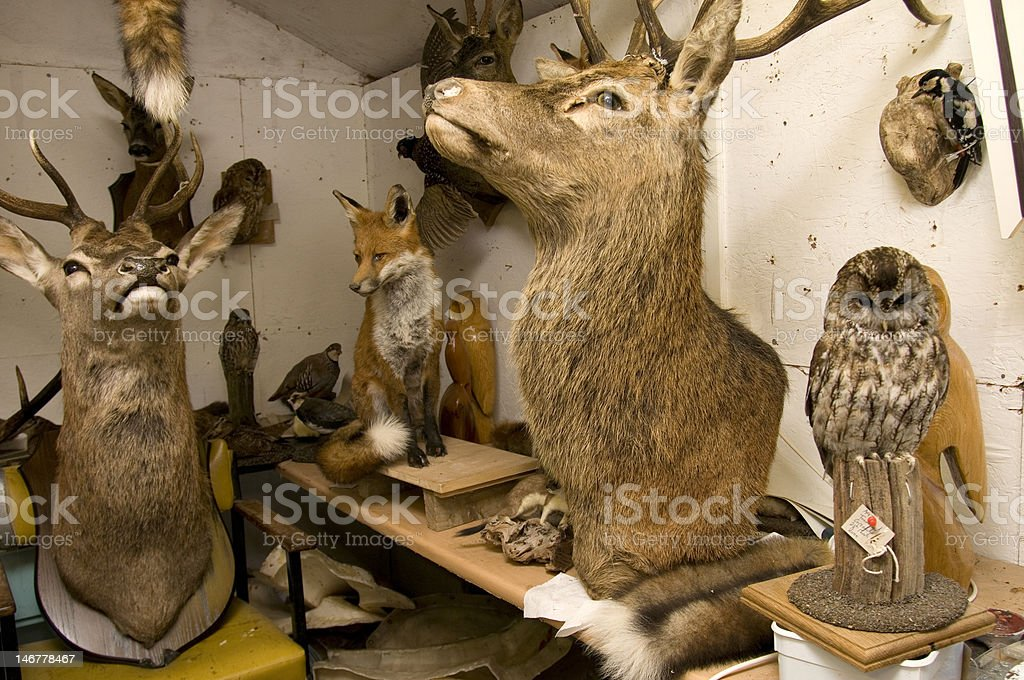 Taxidermists workshop stock photo