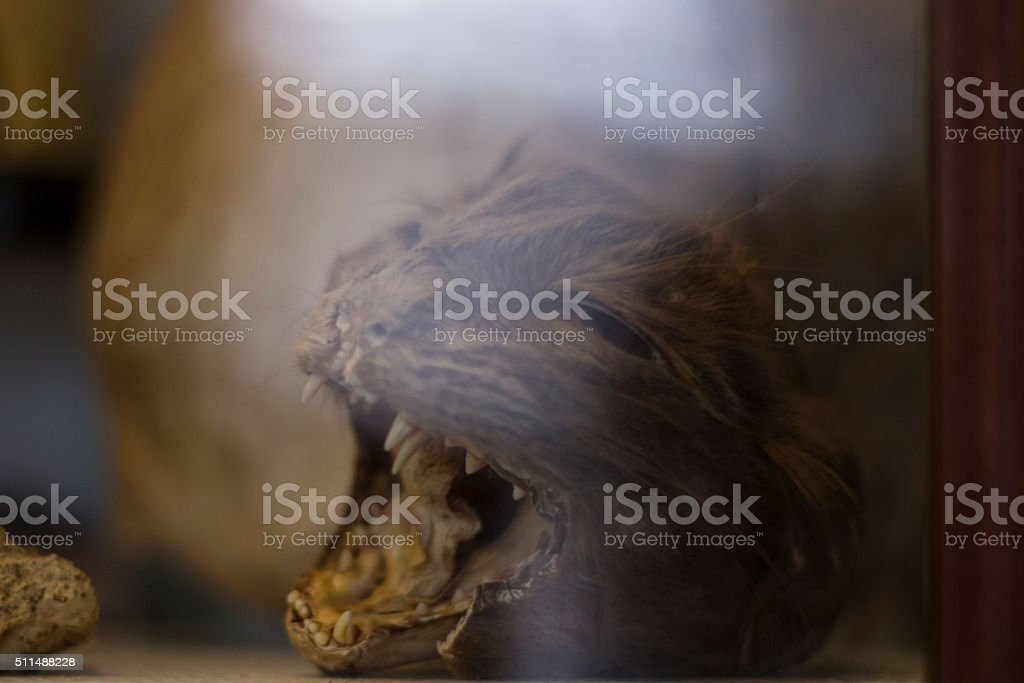 Taxidermy Cat stock photo