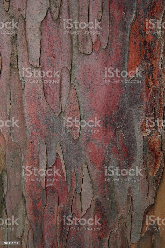 taxus baccata bark stock photo