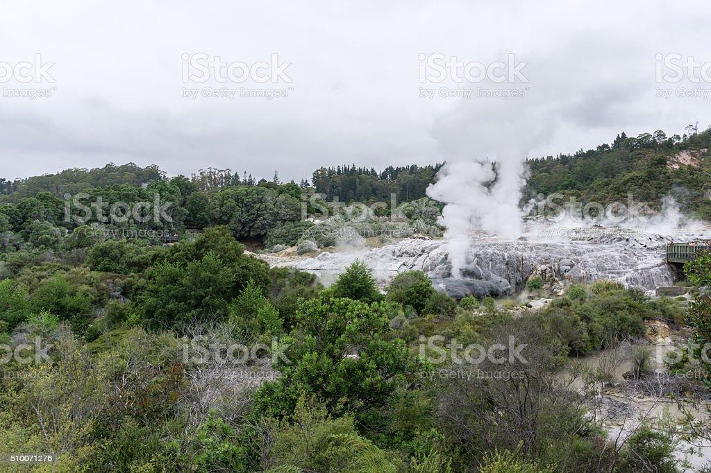 te puia geothermal valley stock photo