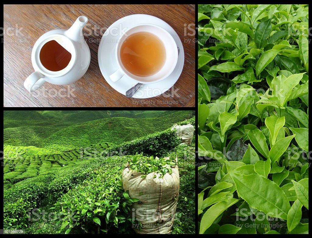 tea collage stock photo