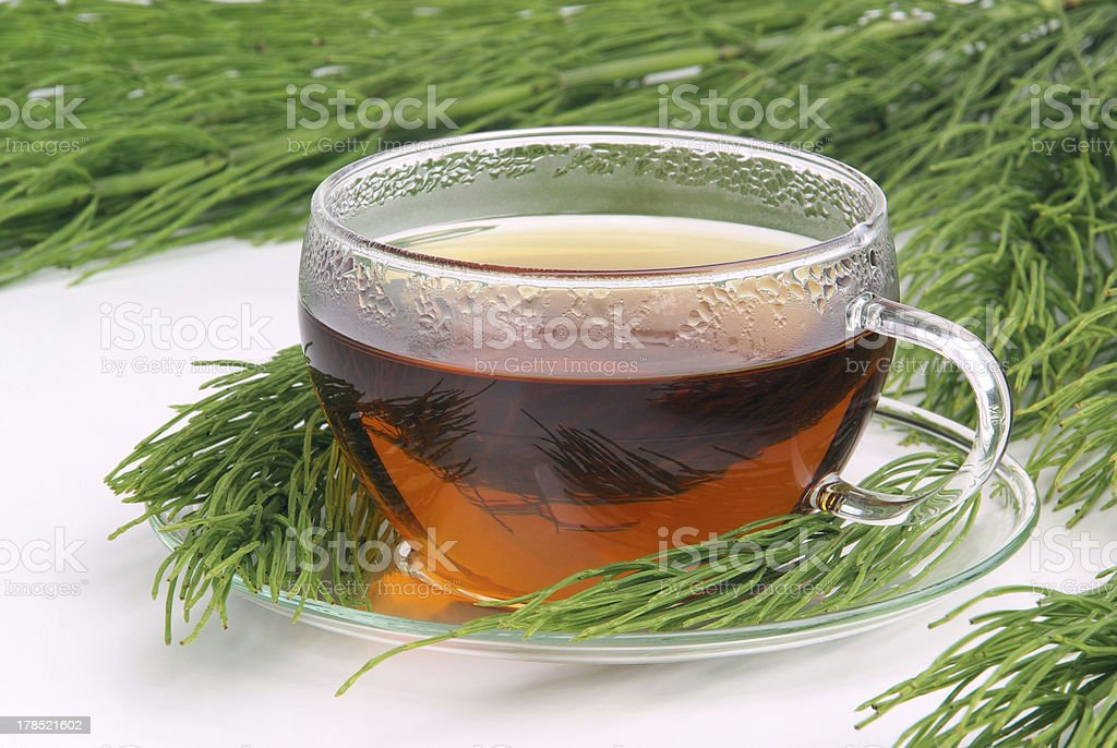 tea field horsetail stock photo