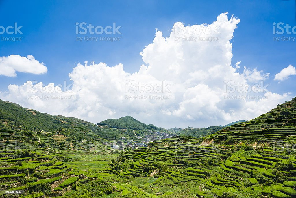 Tea garden and village of anxi at Fujian stock photo