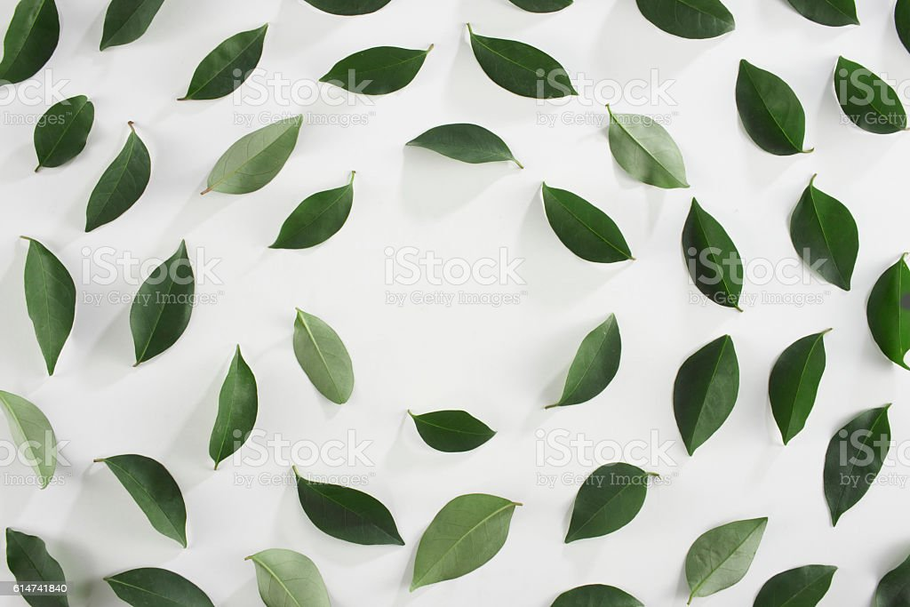Tea leaves stock photo