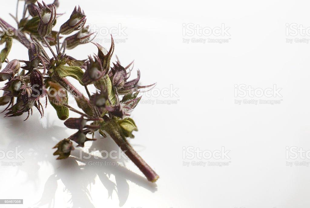 tea macro royalty-free stock photo