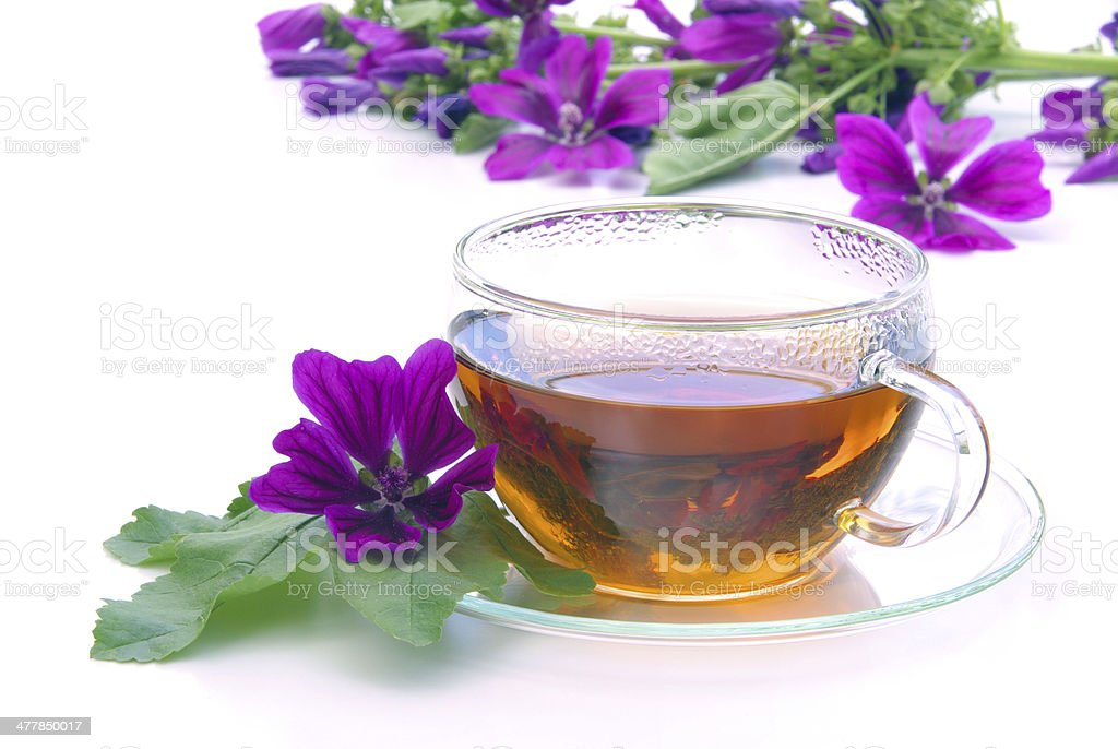 tea malva stock photo