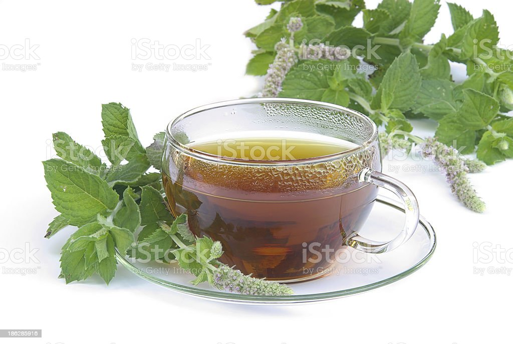 tea mentha stock photo