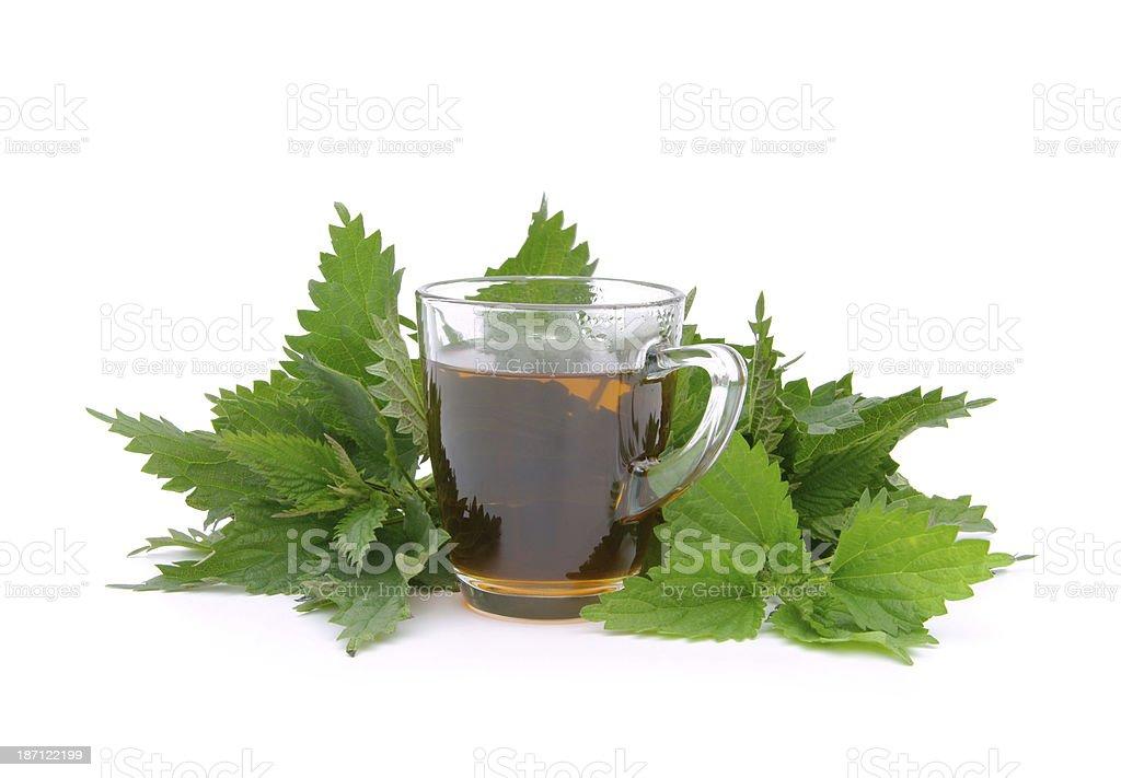 tea nettle stock photo