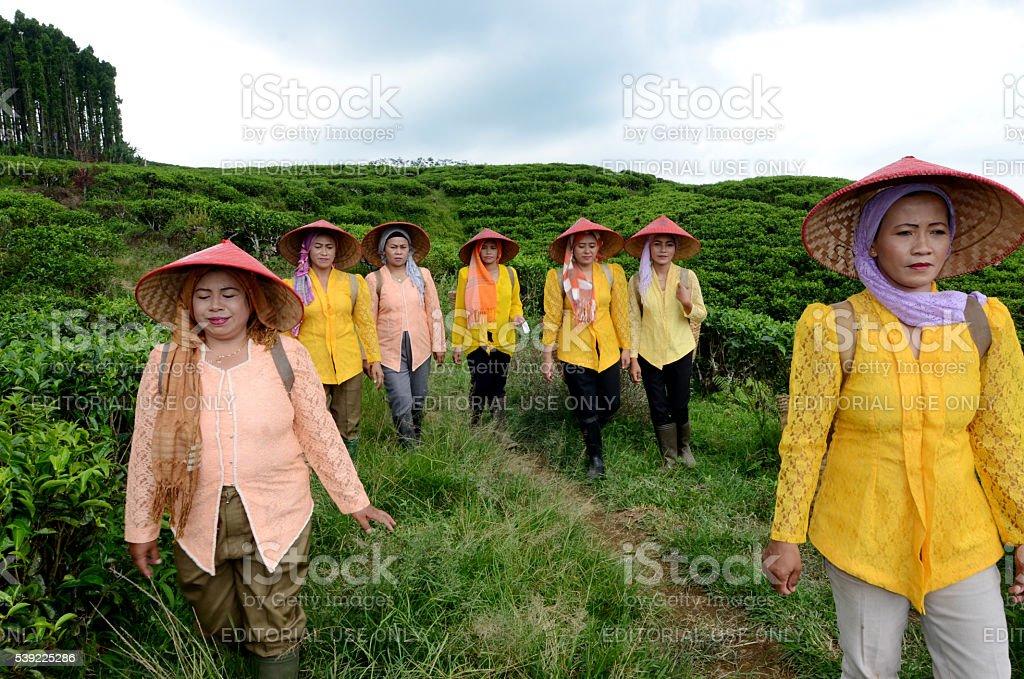 Tea pickers Indonesia stock photo