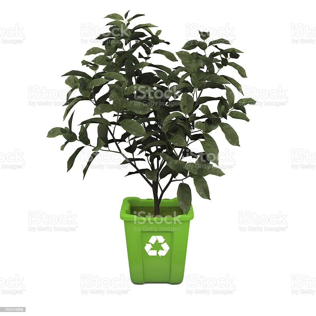 Tea plant in recycle bin royalty-free stock photo