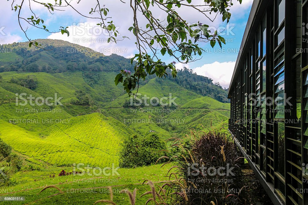 BOH tea plantation and cafe stock photo
