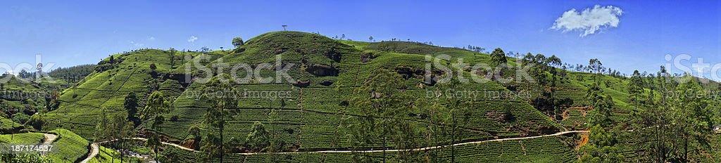 Tea plantation in Sri Lanka royalty-free stock photo