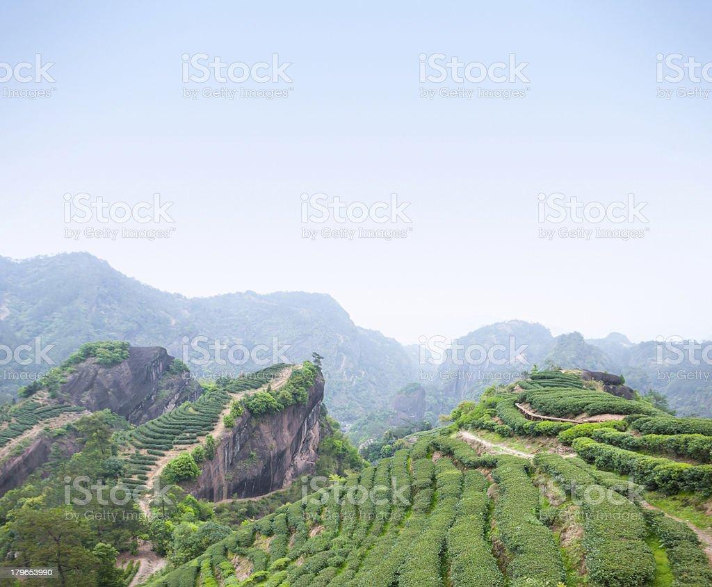 Tea plantation in Wuyi Mountains stock photo