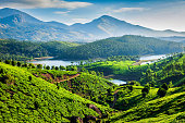 Tea plantations and river in hills. Kerala, India