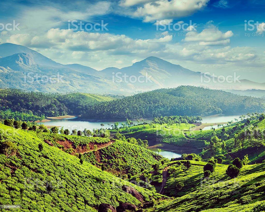 Tea plantations and river in hills near Munnar, Kerala, India stock photo