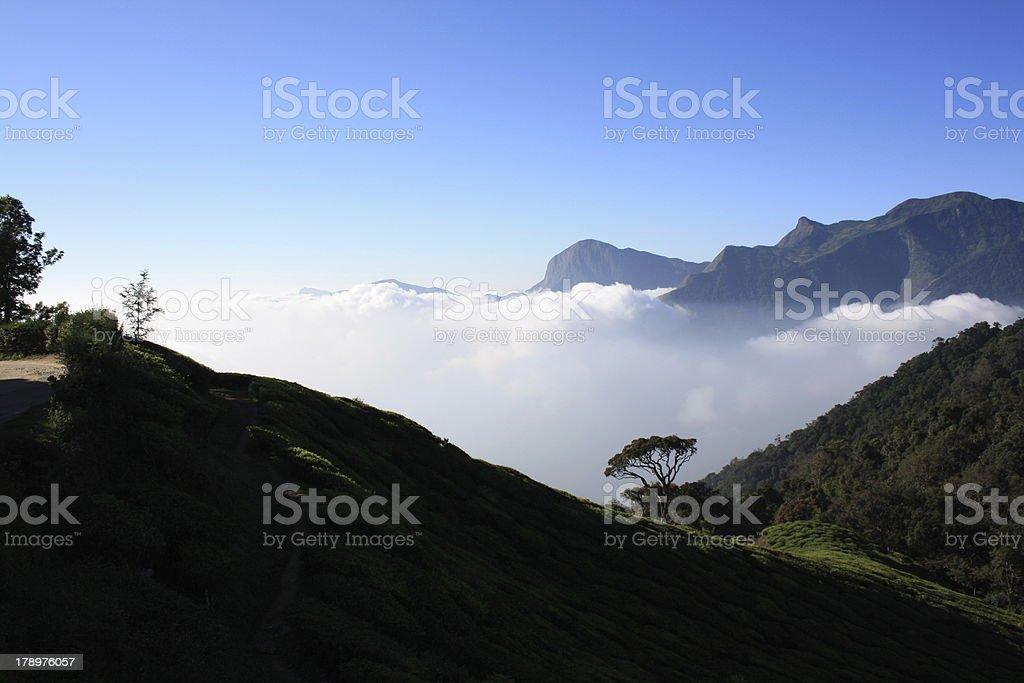 Tea Plantations of Munnar,South India royalty-free stock photo