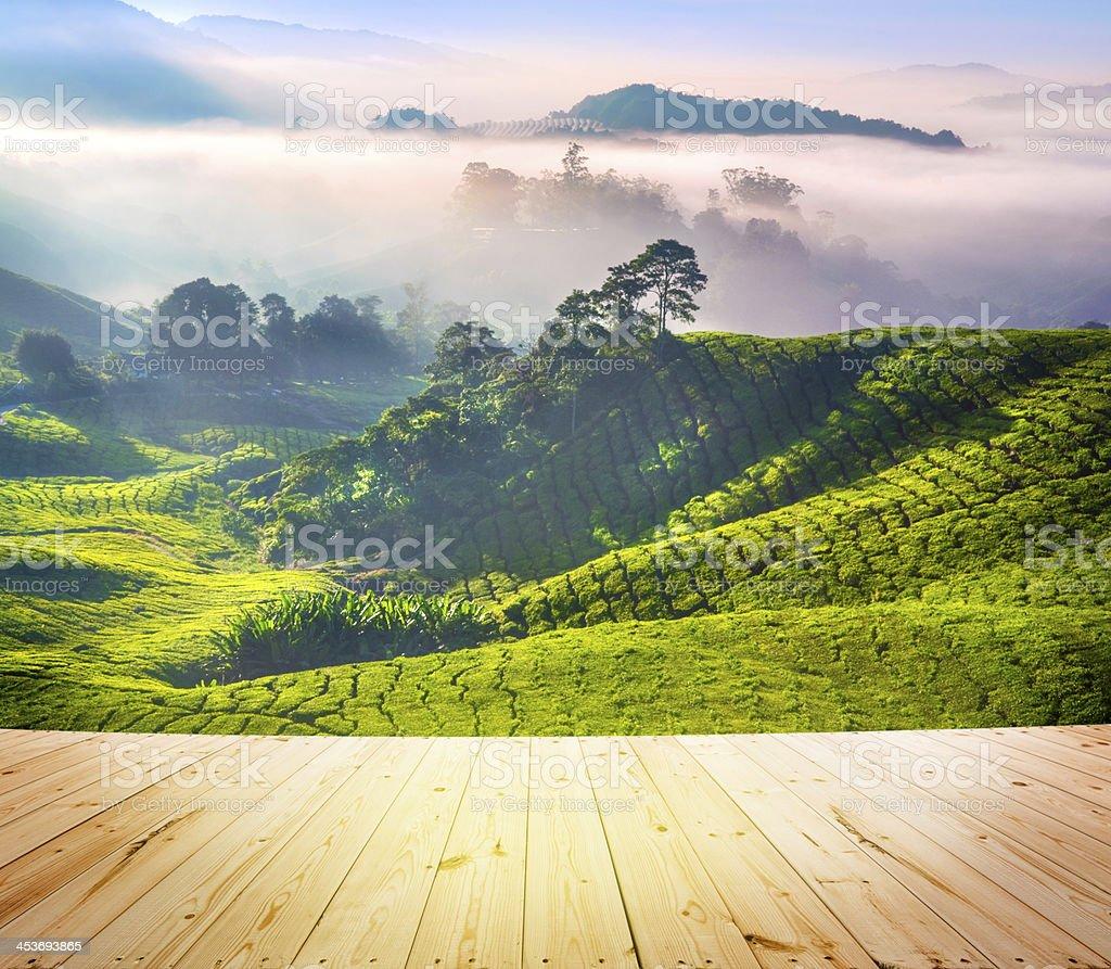 Tea Plantations stock photo