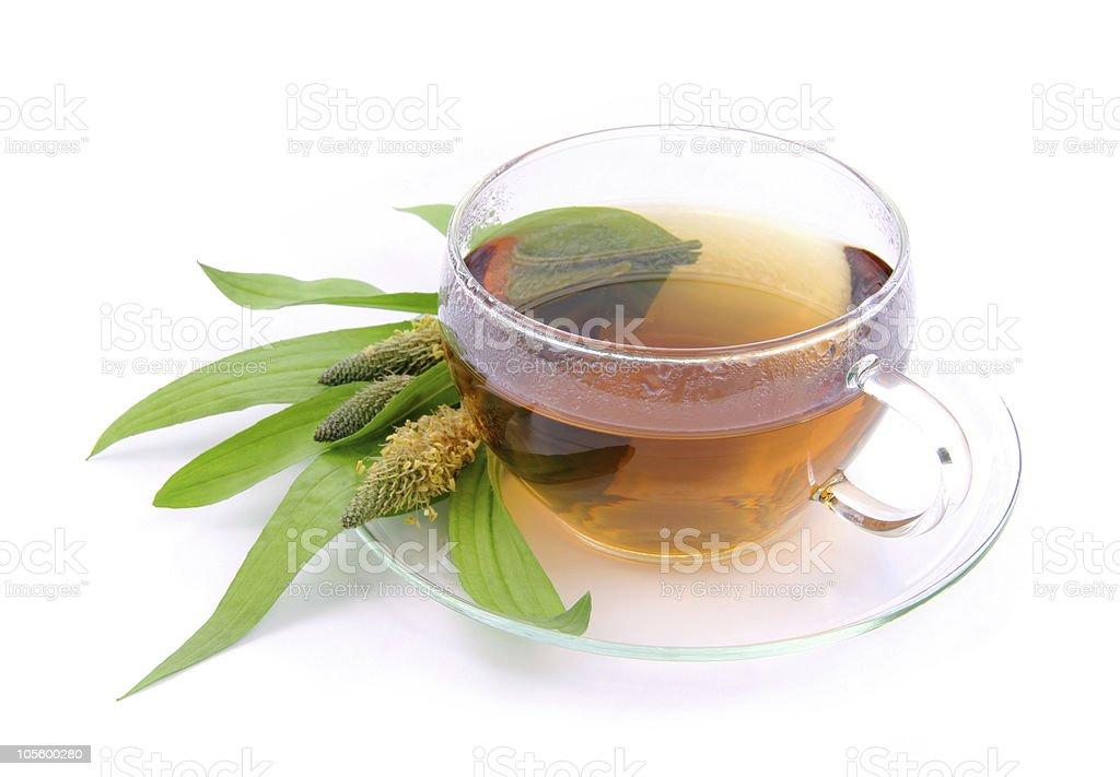 tea ribwort plantain royalty-free stock photo