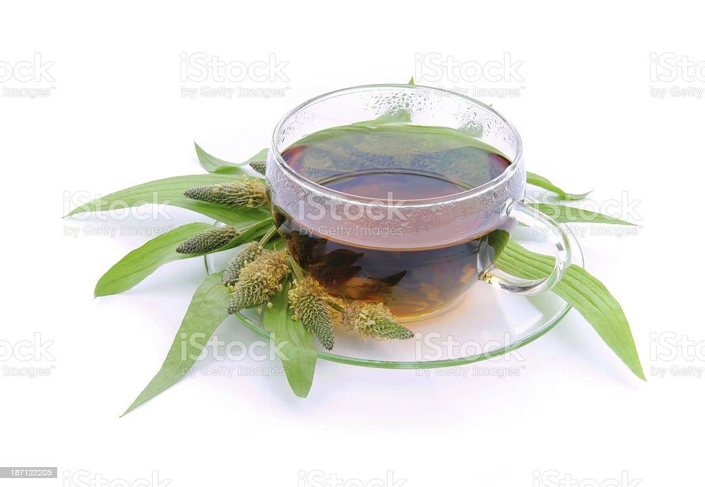 tea ribwort plantain stock photo