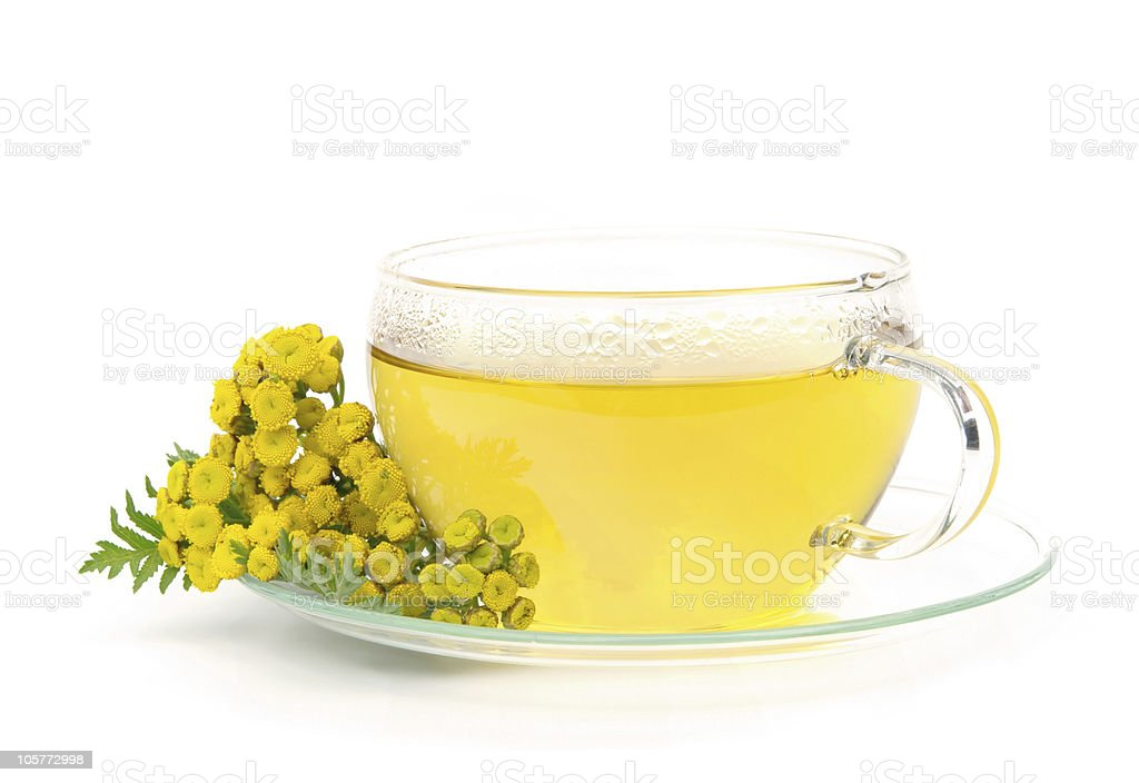 tea tansy royalty-free stock photo