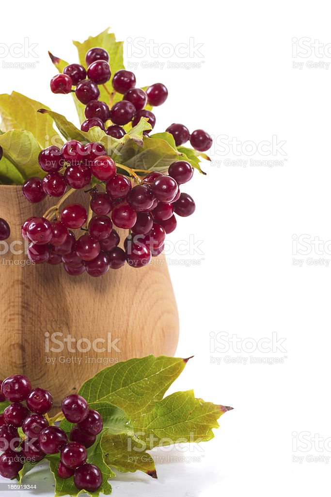 tea viburnum in a cup royalty-free stock photo