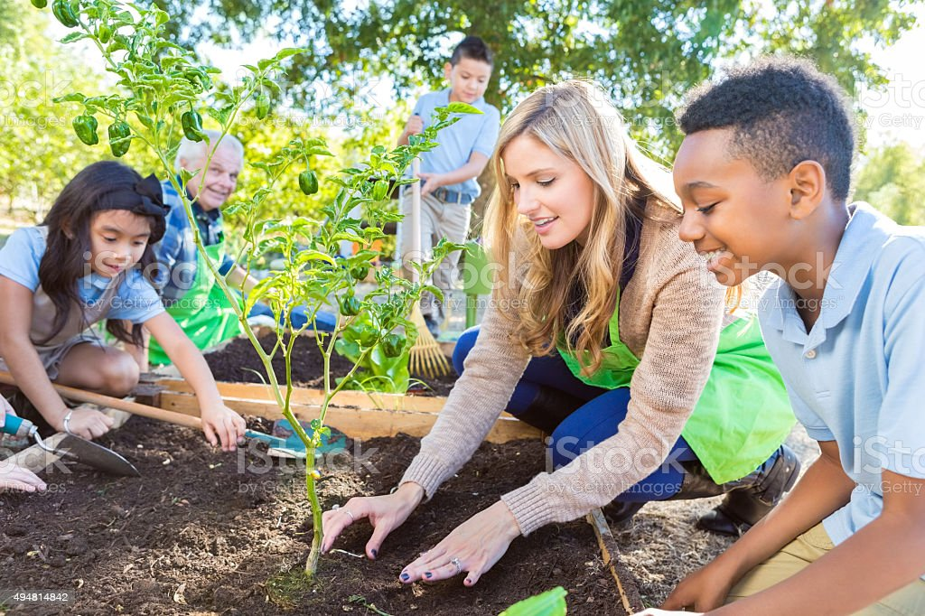 Teacher and farmer teaching elementary students about gardening stock photo