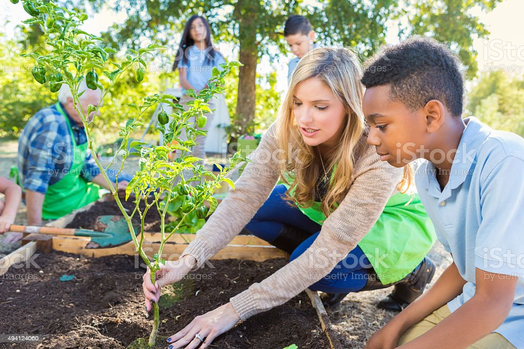 Teacher and student working in garden during farm field trip stock photo