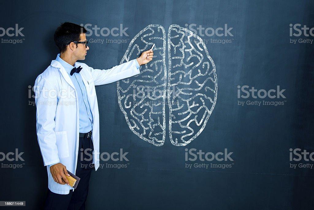 Teacher explaining human brain royalty-free stock photo