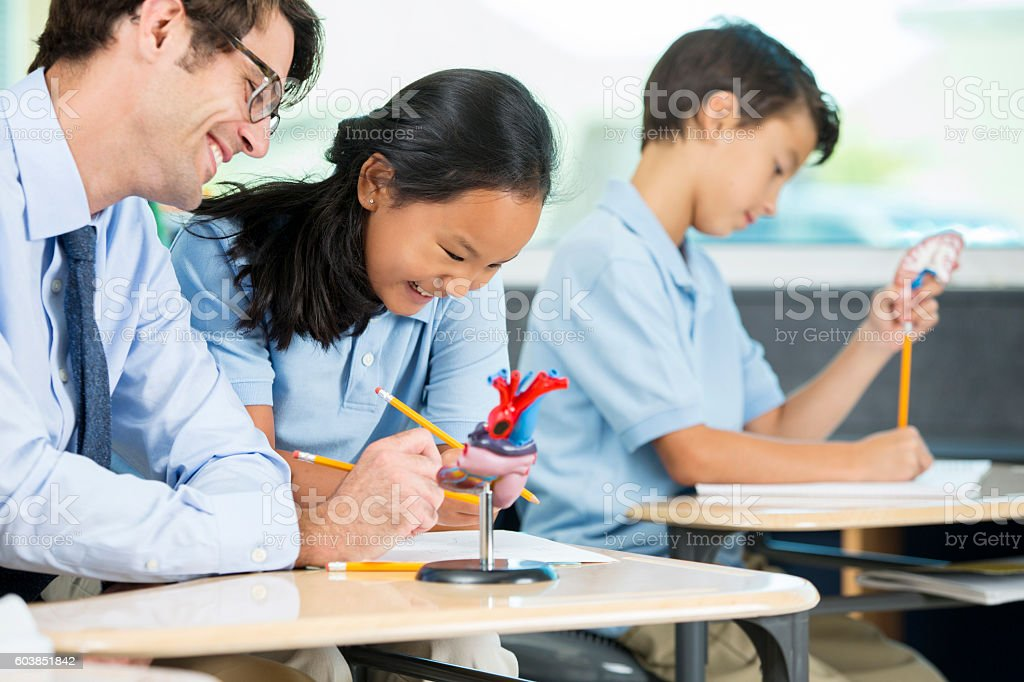 Teacher helping student with biology homework stock photo