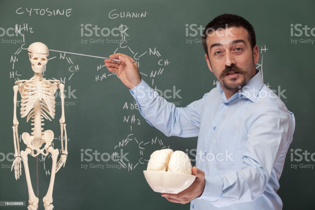 Teacher holding human brain model and pointing the skeleton royalty-free stock photo